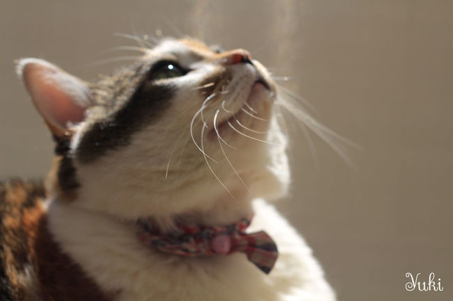 Chibita♡ Family CanonEoskissX7 ウチの姫様 Cat♡ My Cat Cat Lovers