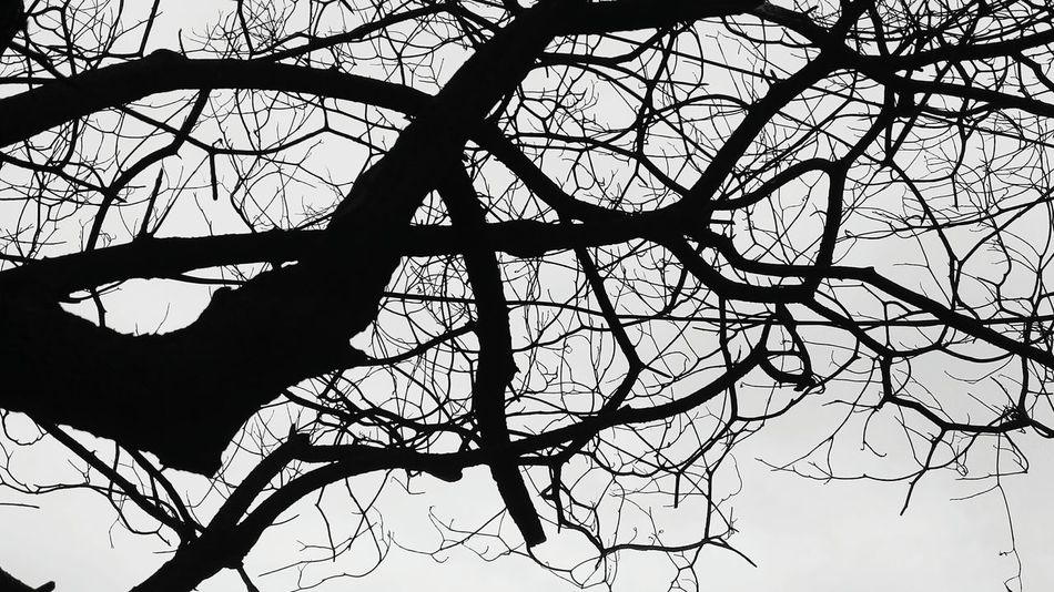 Tree Without Leaves Black And White Monochrome Photography Monochromatic Mobile Photography SSClicks SSClickpix SSClickPics