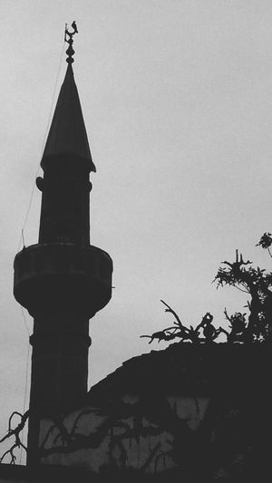 Mosque Bird Photography Tree And Sky Enigma Hacı Memiş Mosque