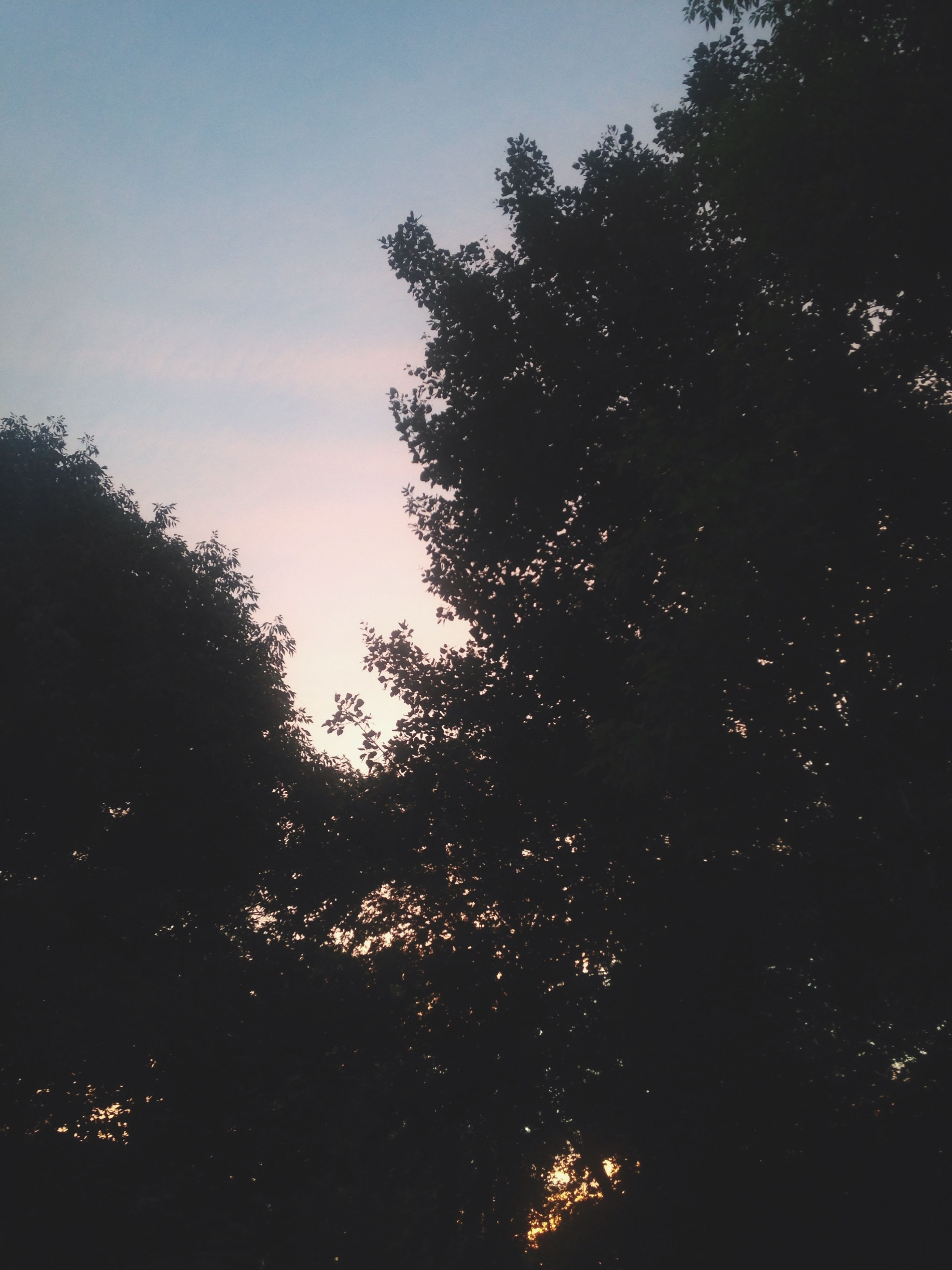 tree, silhouette, tranquility, sky, low angle view, growth, beauty in nature, tranquil scene, nature, scenics, branch, sunset, outdoors, idyllic, dusk, no people, forest, sunlight, non-urban scene, dark
