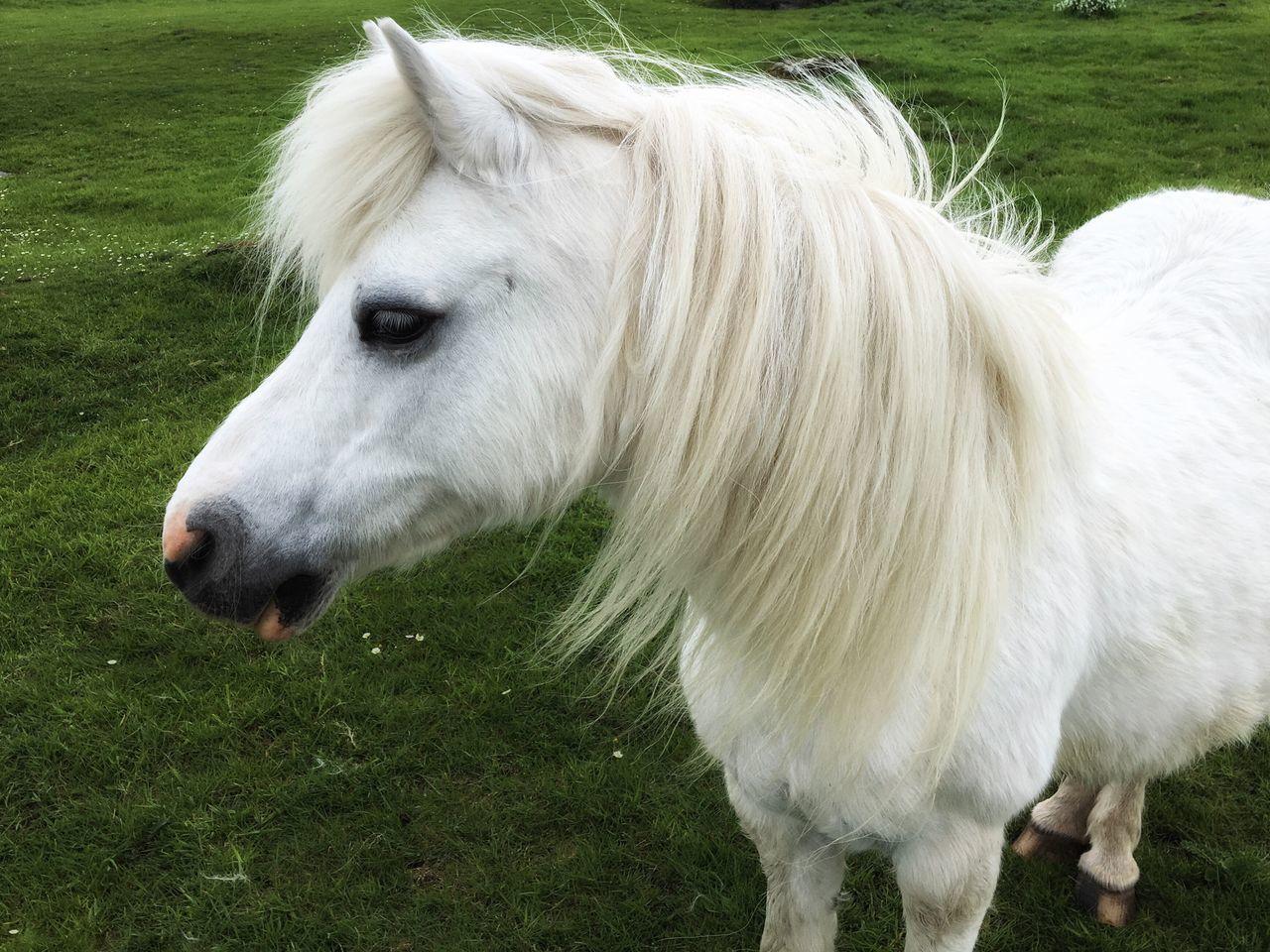 Beautiful stock photos of irland, Animal Hair, Animal Themes, Day, Dingle