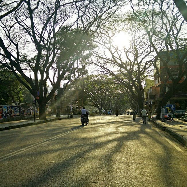 Morning Walk Streetphotography Sunrays Trees Spring Leaves Shedding Oneplus Camera Photography Awesome Noedit Insta_follow Insta_pic Ig_india India