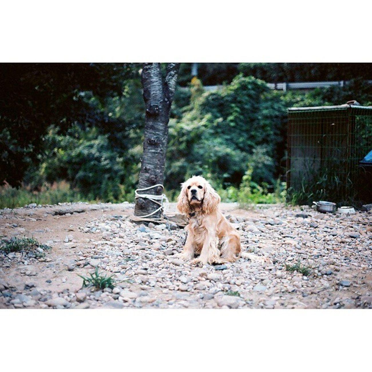 대구 칠곡 Y스튜디오 강아지 멍멍이 멍스타그램 필카 필름카메라 필름 일사스냅 취미 Canon NF1