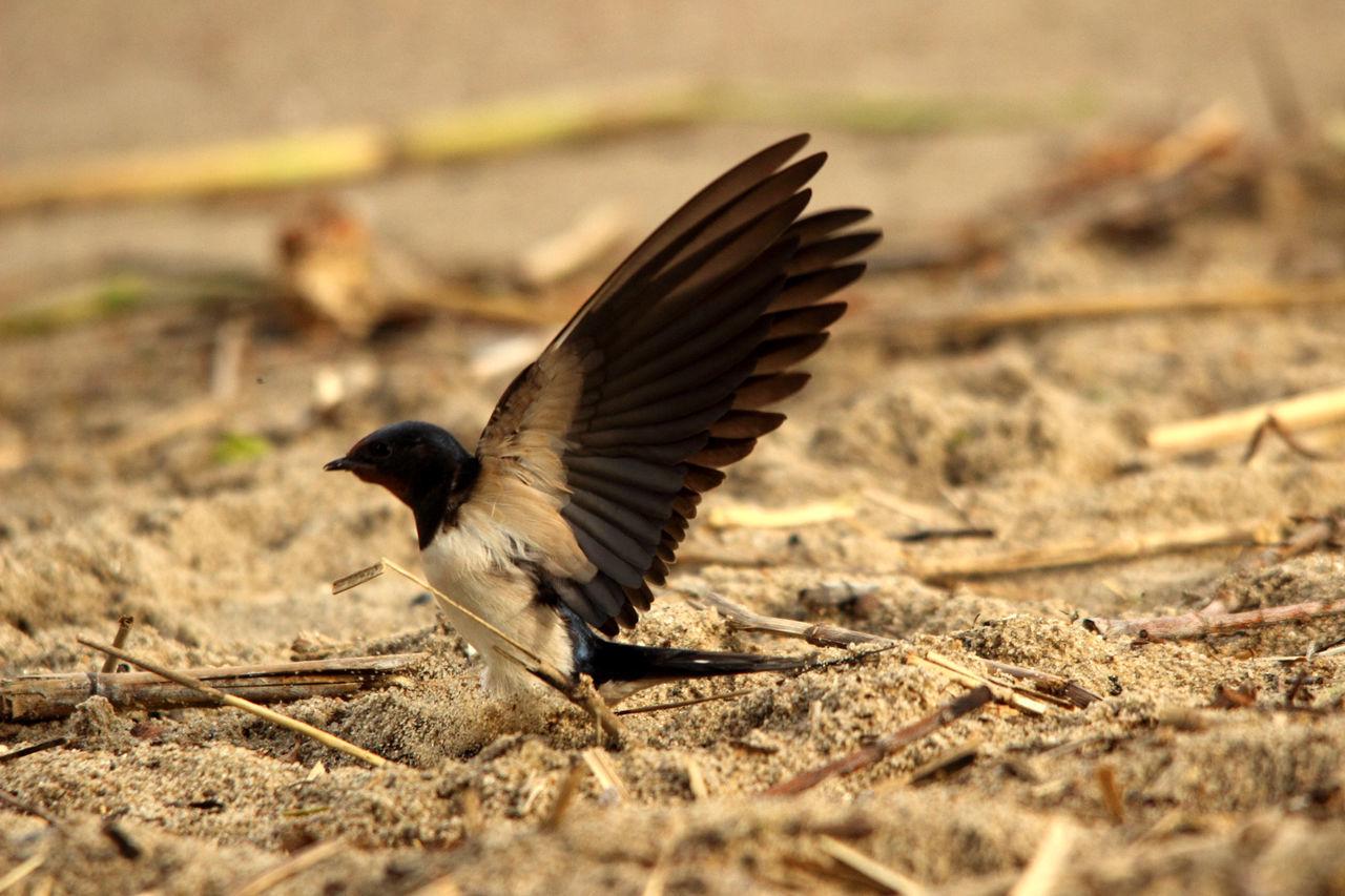Animal Wildlife Animals In The Wild Animals In The Wild Bird Flying Havel Havelufer Nature Nature Nature Photography Vogel