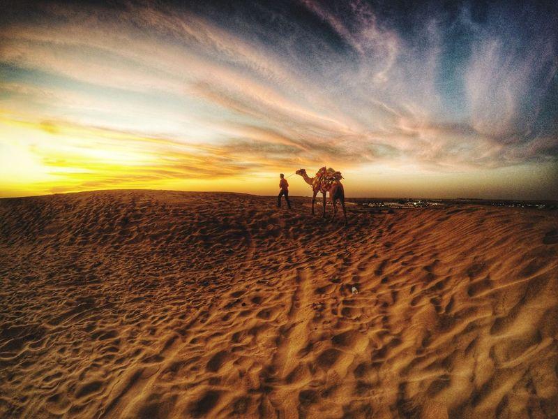 The Tourist Rajsthan Tourism Incidental People Desert Desert Beauty Camel Ride Sands Sunset Colours