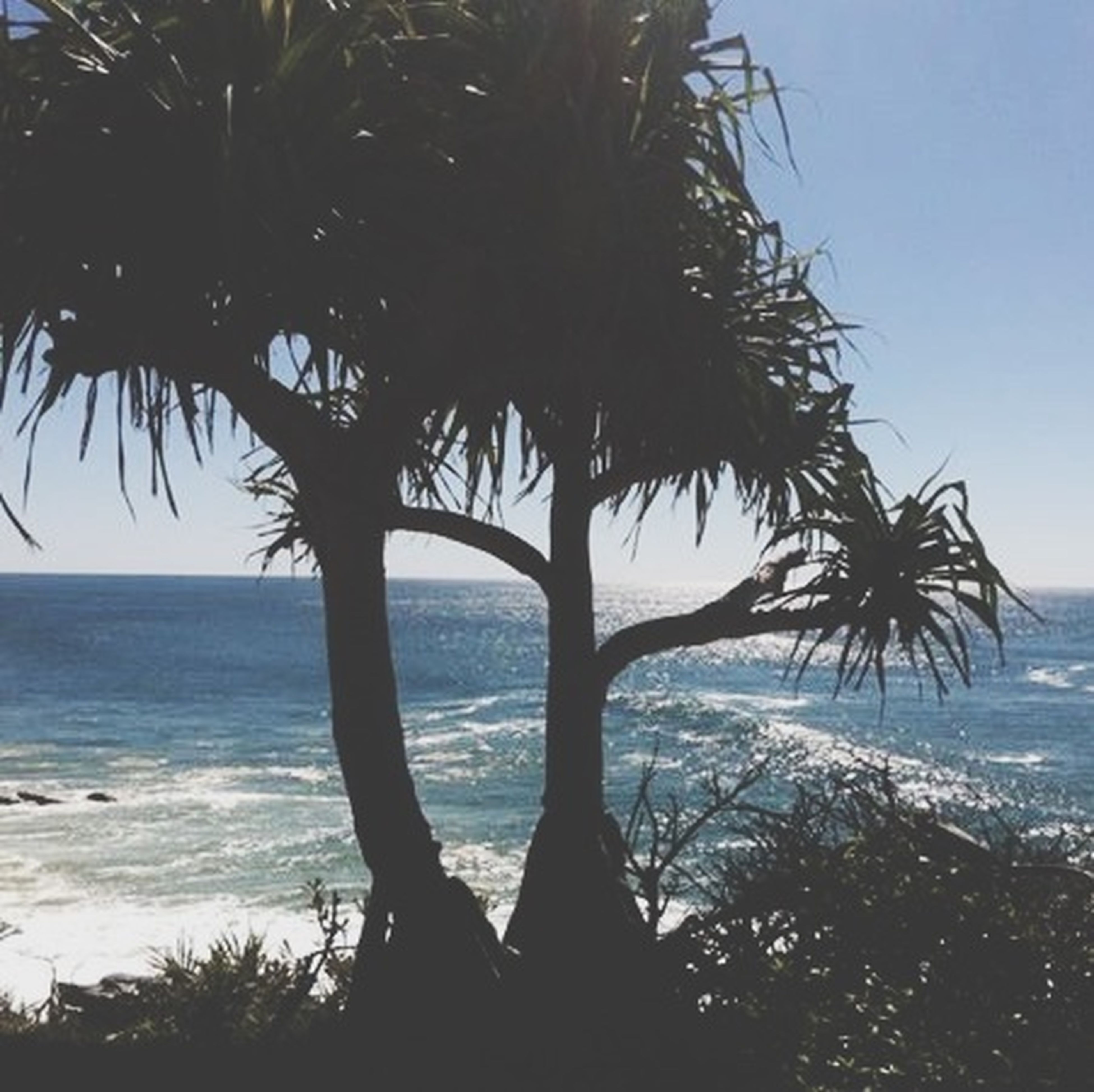 sea, palm tree, horizon over water, water, beach, tree, tranquility, tranquil scene, scenics, beauty in nature, shore, nature, sky, tree trunk, growth, silhouette, clear sky, idyllic, outdoors, branch
