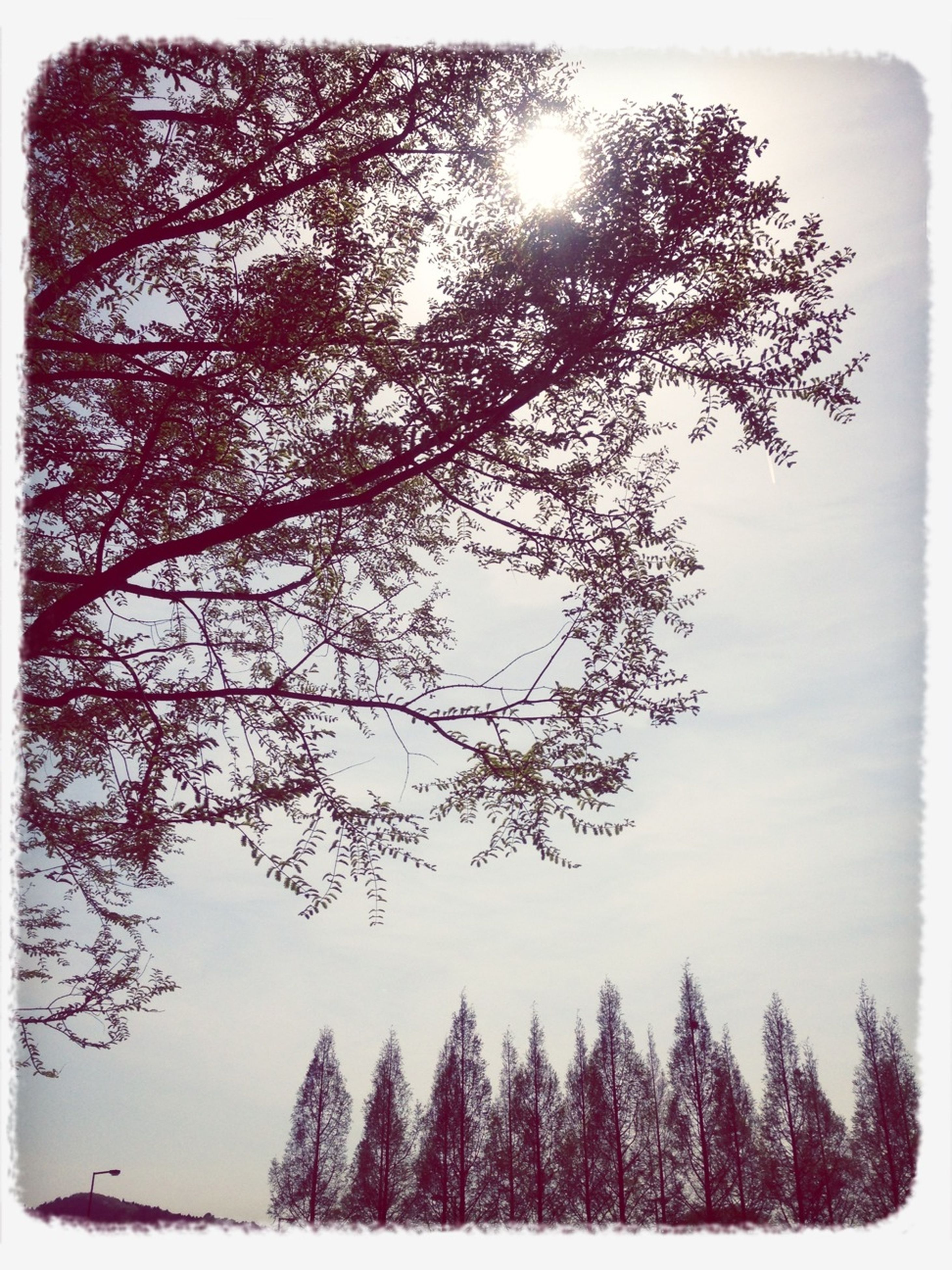transfer print, tree, auto post production filter, tranquility, branch, tranquil scene, beauty in nature, nature, scenics, growth, sky, sun, low angle view, bare tree, sunlight, clear sky, silhouette, day, forest, outdoors