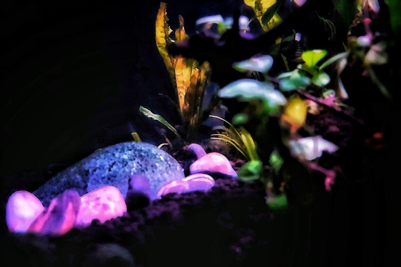 Night Illuminated Close-up Beauty In Nature Nanotank Underwater Photography Aquarium Aquarium Photography Aquarium Life Aquascaping