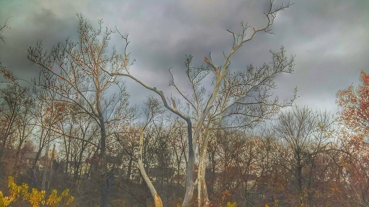 tree, nature, bare tree, sky, branch, outdoors, beauty in nature, tranquility, no people, day, scenics, plant, growth, low angle view, forest