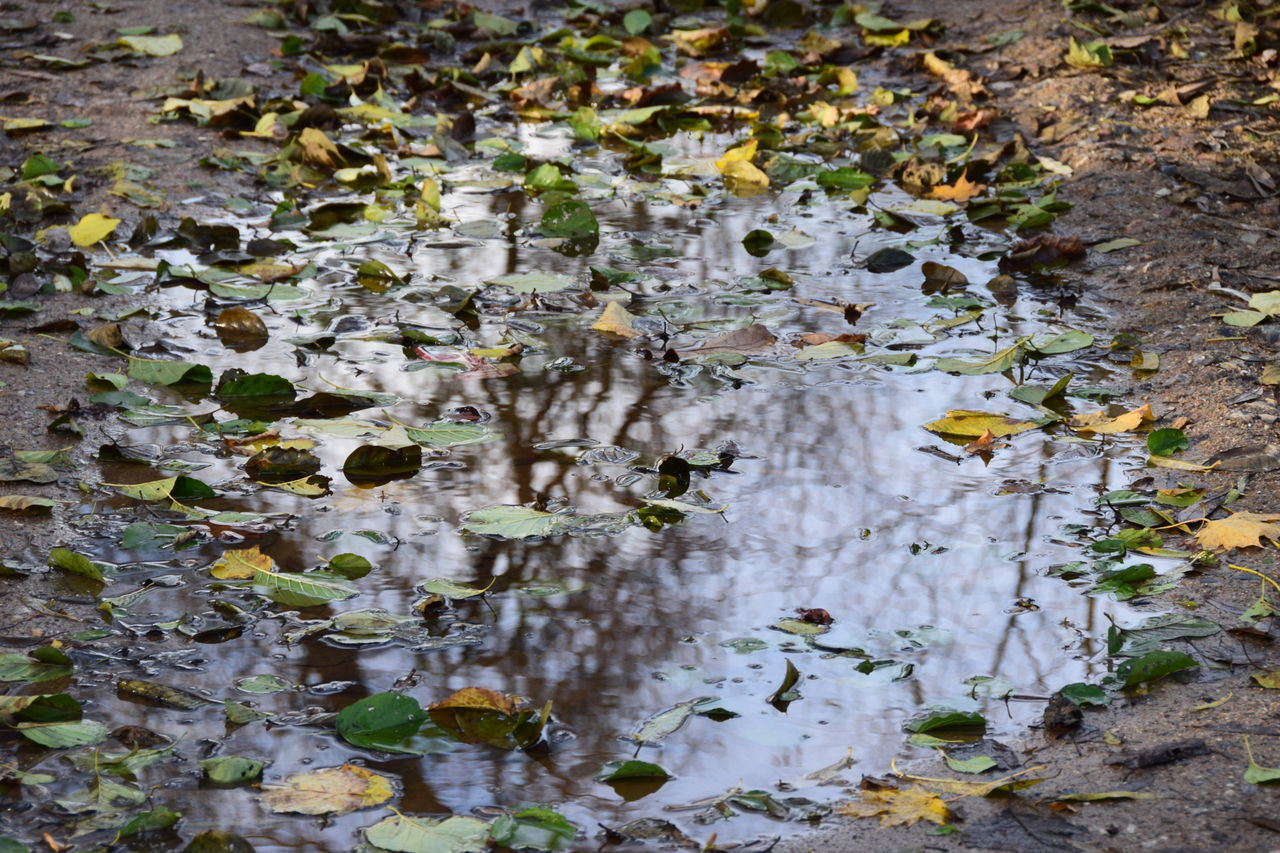 nature, leaf, day, outdoors, water, no people, growth, plant, beauty in nature, close-up, fragility, tree, animal themes