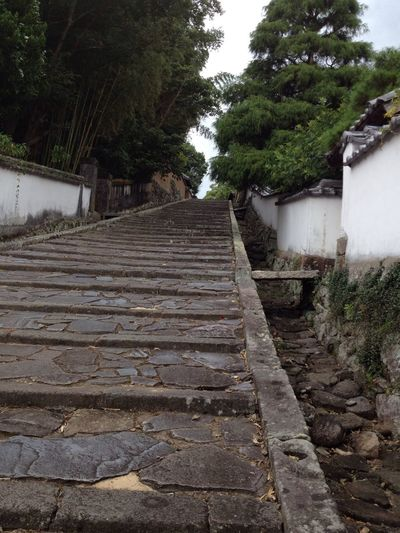Low Angle View Stone Stairs Staircase Steps Green Tree Japanese Style Steps And Staircases Japan Photography Eye4photography  EyeEm Gallery Taking Photos Getting Inspired Hello World Check This Out Capture The Moment EyeEm Summer Landscape Location Travel Ooita Japan