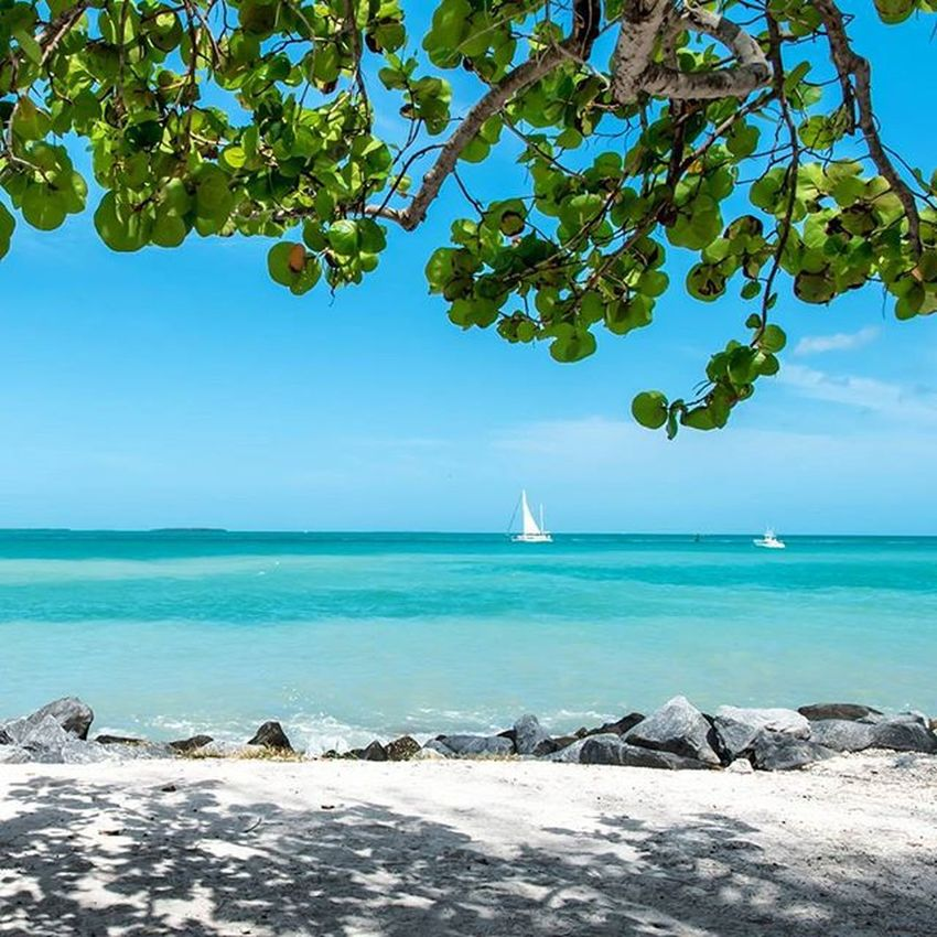 Finding shade 🌤 Taking Photos Hanging Out Relaxing Enjoying Life Bluewater Sailboat Nikonphotography Nikon Travel Traveling Landscape Landscape_Collection Beach Photography Sunshine Palm Trees Fortzach Florida Keywest Summer