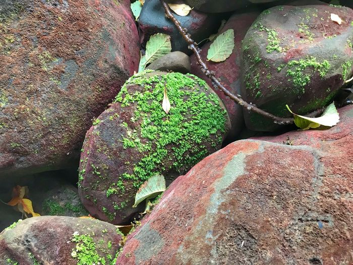 Close up of brightly colored rocks Pacific Northwest Beauty Rock - Object No People Outdoors Day Nature Moss Green Color Beauty In Nature Close-up
