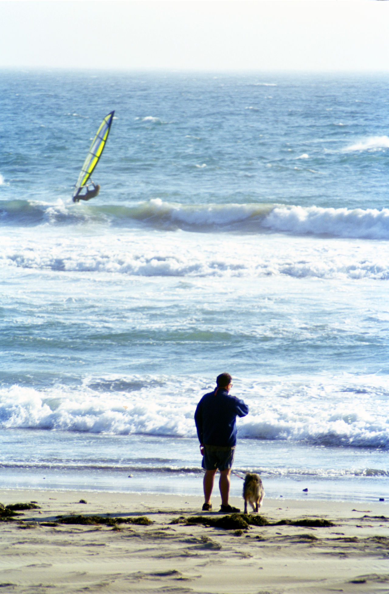 Man and dog watching wind surfer from the beach Dog Man Summer Beach Photography Beach California Oceanside Surf's Up Surfing Life Wind Surfing Wind Surf Wind Surfer California Coast Windsurf Life Windsurfer Surfer Windsurfing Windsurfers Windsurf Catching Waves Beach Life Surf Photography Surfers Paradise Beachphotography Ocean