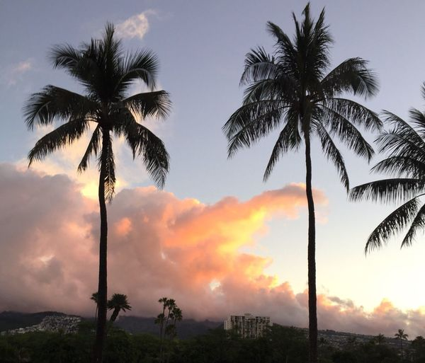 Oahu, Hawaii Palm Tree Tropical Island Sunset Tropics Beauty In Nature Island Sky Silhouette Growth Cloud - Sky Tranquil Scene No People Sea Day The Week On EyeEm Oahu Island Hawaii Tropical Been There. Paint The Town Yellow Second Acts Island Of Oahu, Hawaii Oahu / Hawaii An Eye For Travel