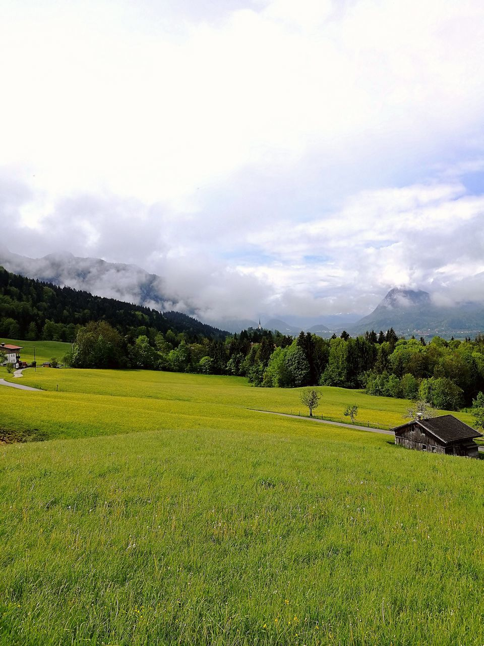 grass, nature, landscape, no people, tranquil scene, tranquility, beauty in nature, field, scenics, green color, sky, day, cloud - sky, tree, mountain, outdoors