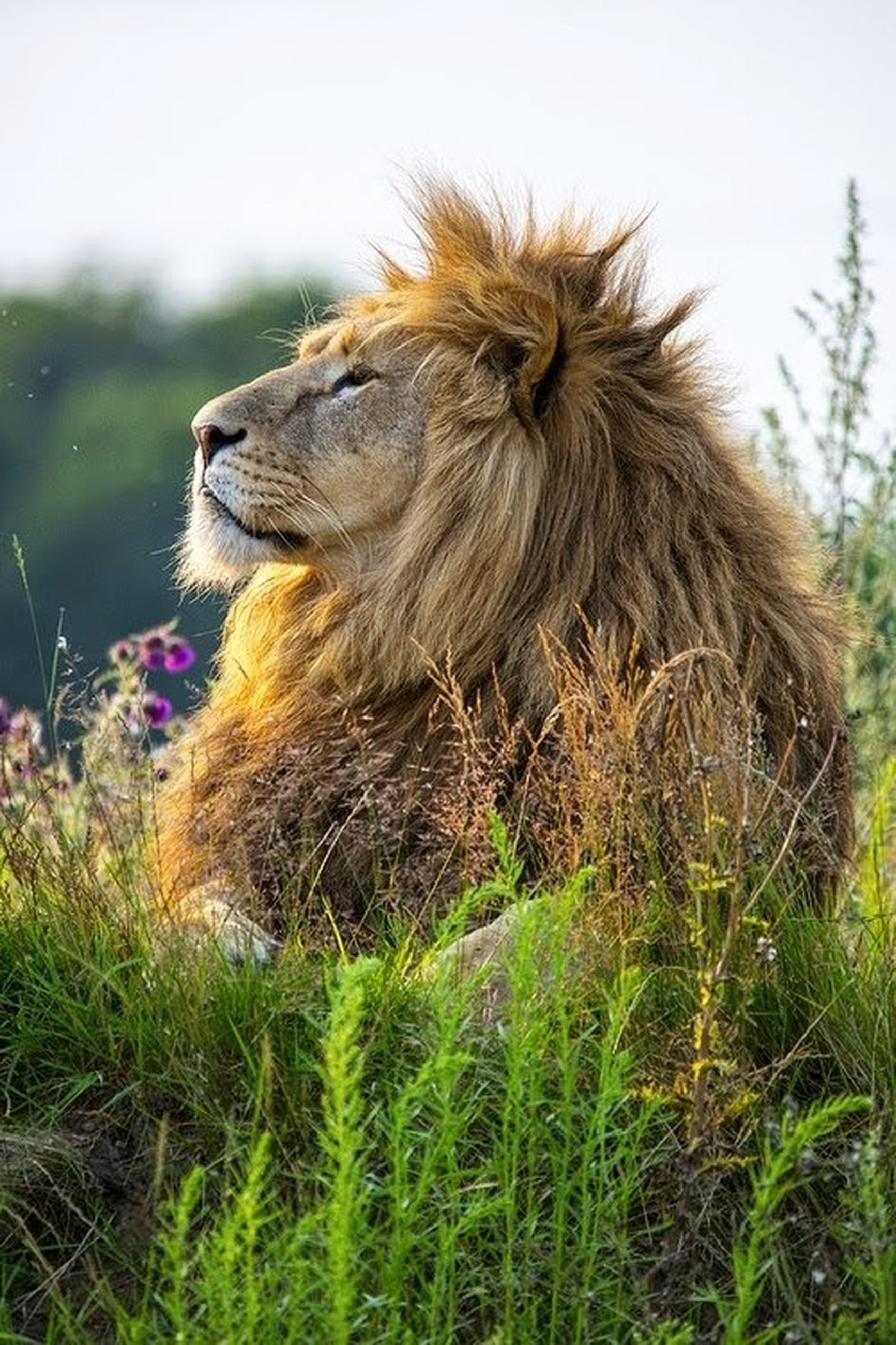 animal themes, one animal, grass, mammal, animal head, animals in the wild, field, domestic animals, wildlife, close-up, focus on foreground, nature, animal hair, side view, grassy, animal body part, outdoors, day, no people, plant
