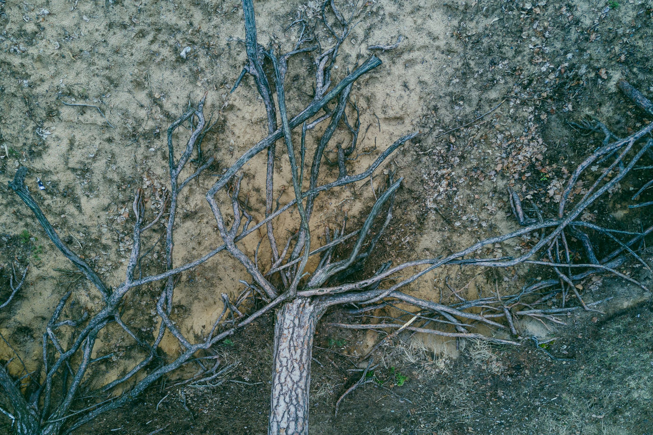 Tree Beauty In Nature Day Drone  Flying High Forest Mavic Mavic Pro Nature No People Outdoors Roots Roots Of Tree Top Down Tree