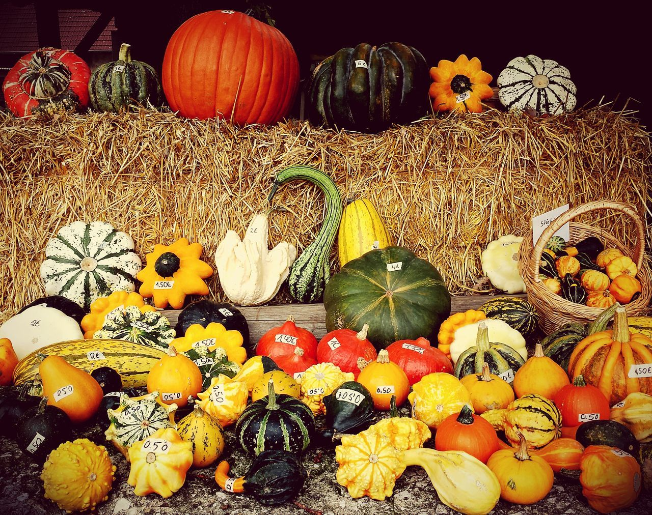 Everyone different and still the same - MAinLoveWithColors Pumpkin Pumpkins Things Organized Neatly