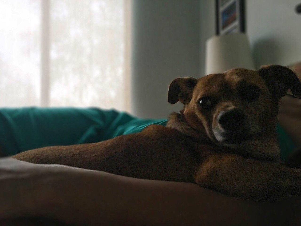 Nap Time Dog Naptime Snugglebuddy Secure