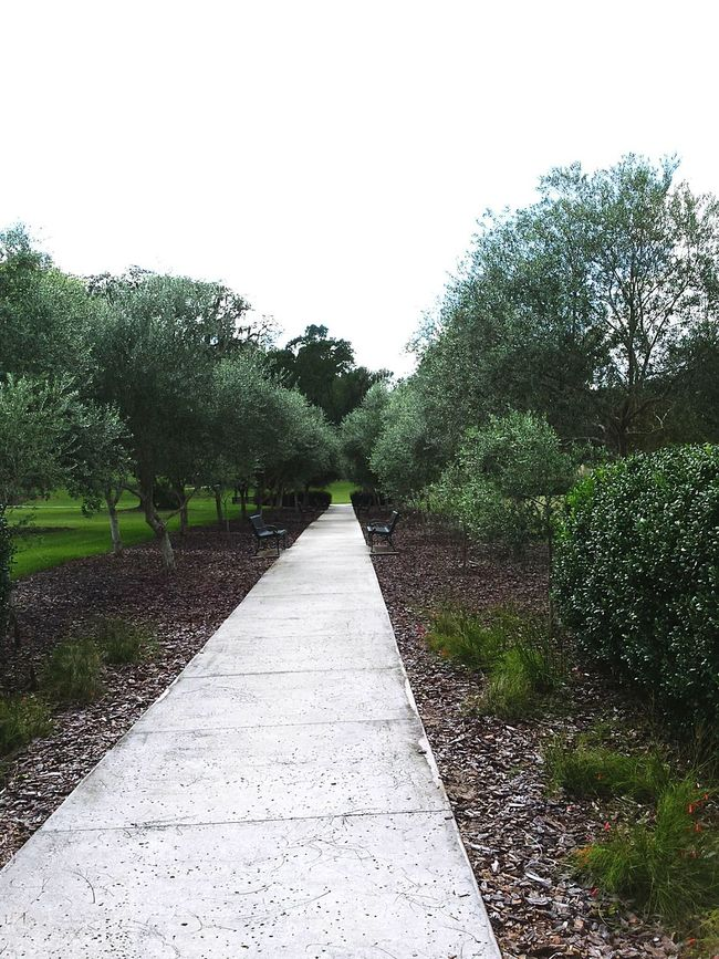 Path continues to much beauty Walking Around Taking Pictures Following The Path... Tree And Bushes Taking Photos Enjoying Life Eyeem Photography Eyeem Photo Color Eyeem Best Shots Eyeem Gallery Renembering What I Love