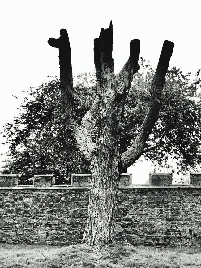 Auckland Castle tree Trees Bishop Auckland Auckland Castle County Durham B&w Photography North East TreePorn