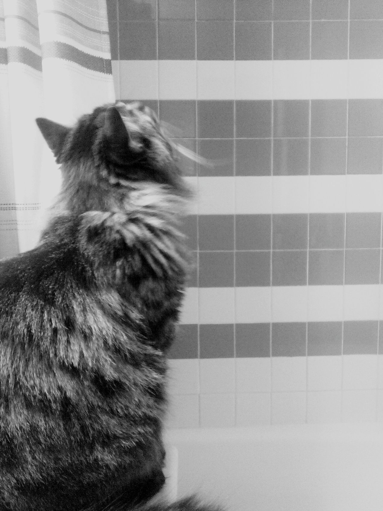 Check This Out Rule Of Thirds Cat Black And White Black & White Hugo Hugo The Cat Full Frame Pattern Pattern, Texture, Shape And Form Shower Sink Maine Coon Maincoon