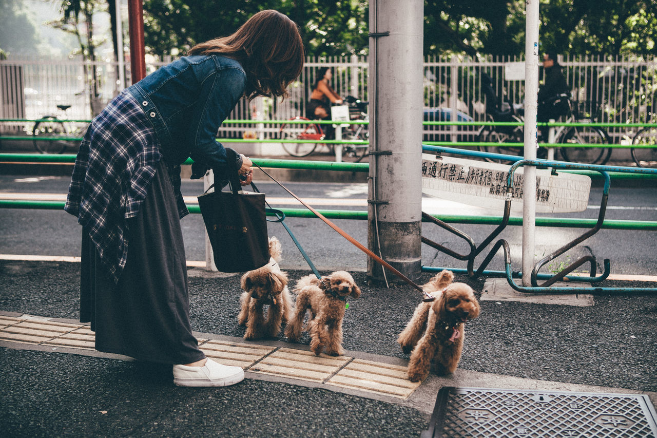 Dogs Japan Tokyo Ittle Walking Street Photography Street Life Life Everyday Pmg_tok
