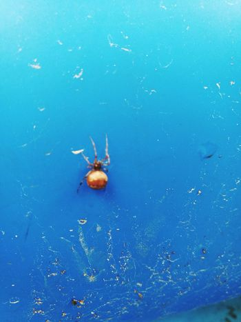 Sweemingpool Spider Holidays ☀ Guest Taking Photos Check This Out Relaxing HuaweiP9 Love Nature