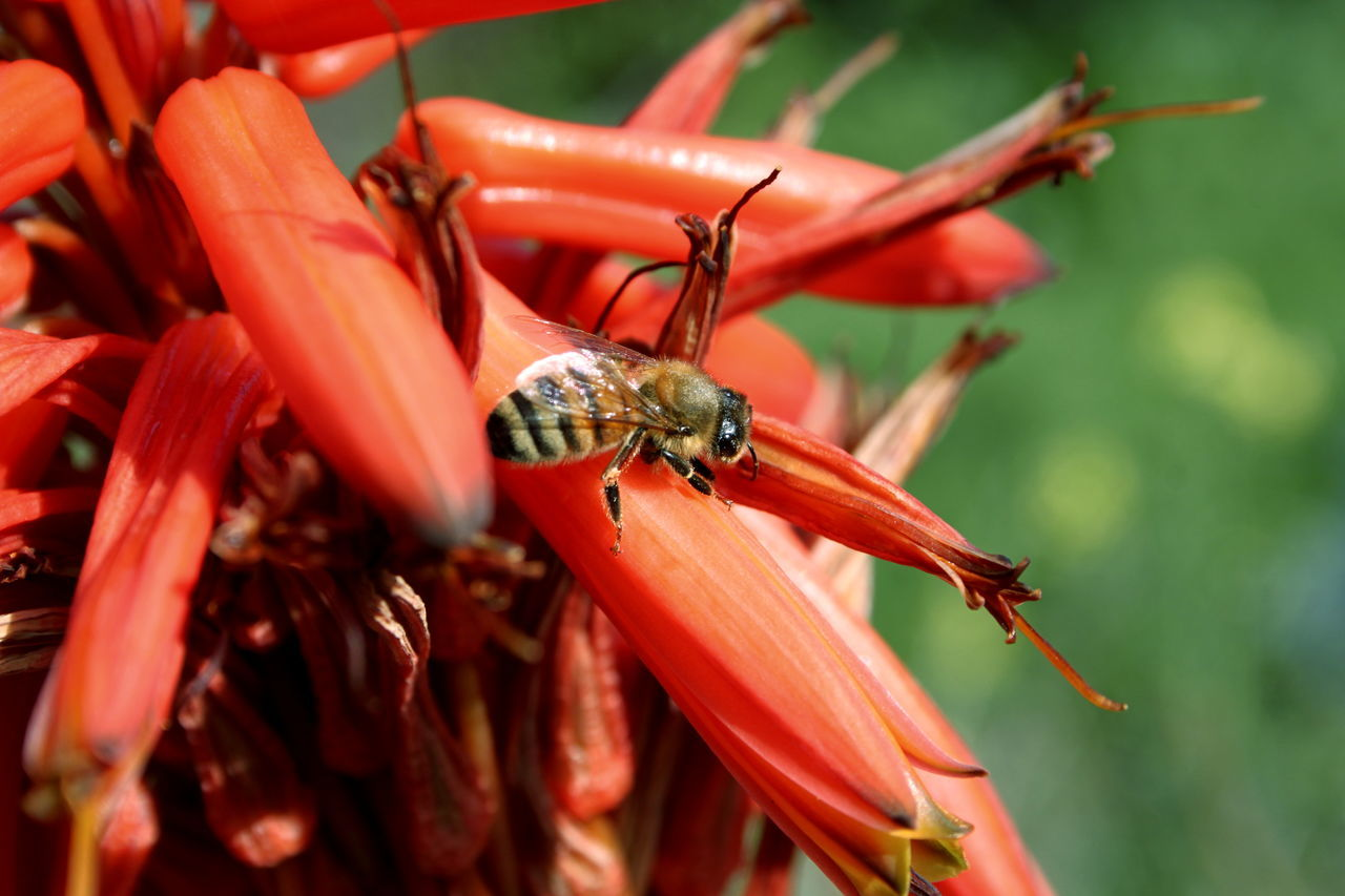 red, insect, animal themes, animals in the wild, one animal, animal wildlife, no people, close-up, day, nature, outdoors, plant, growth, beauty in nature, freshness