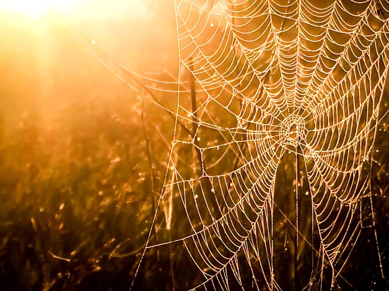"""Charlotte"" Spider Web Close-up Beauty In Nature Nature Full Frame Fine Art Fine Art Photography Fineart Golden Hour Morning Light Morning Sun Nature Photography Nature_collection Nature"