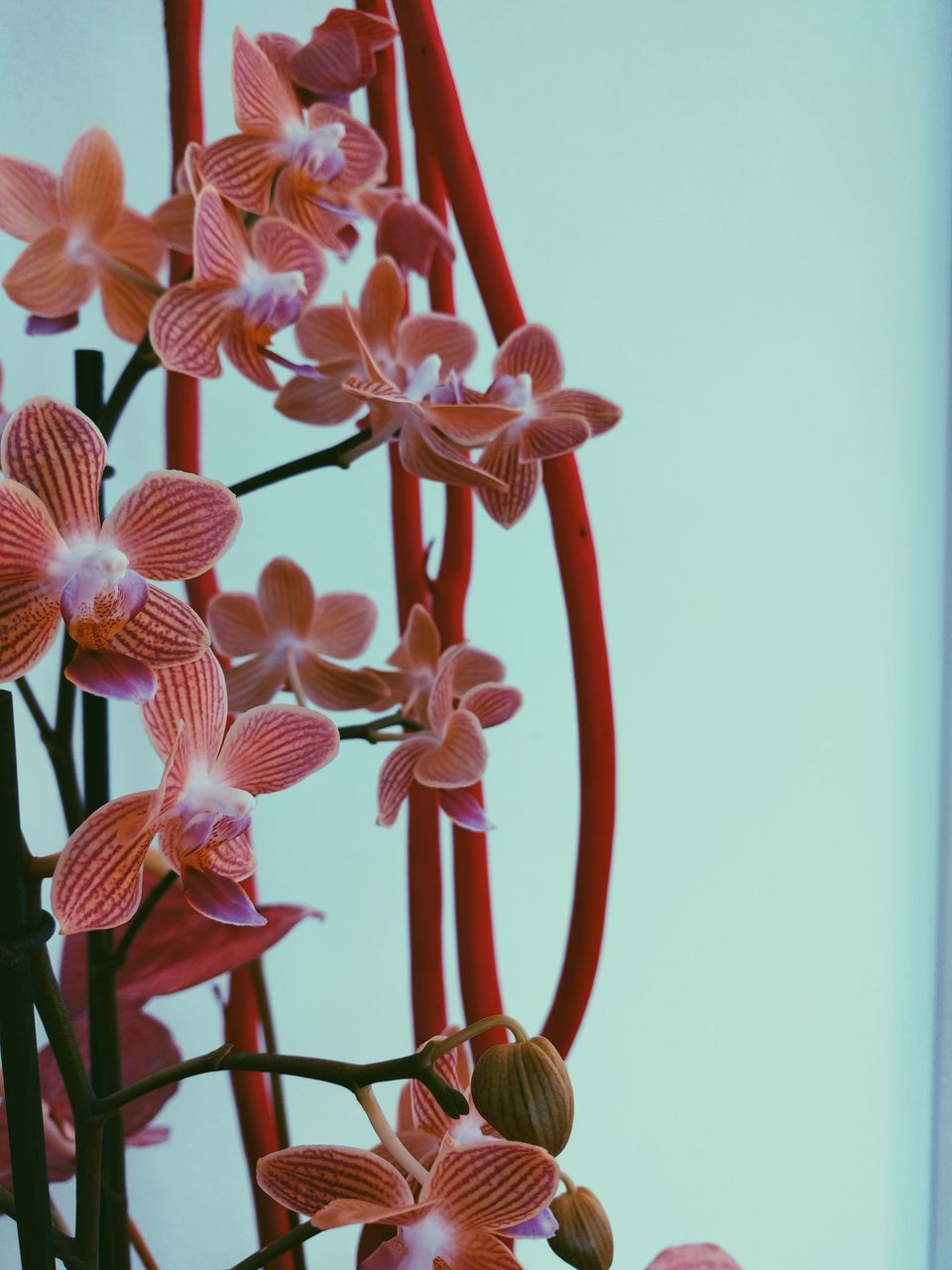 no people, close-up, clear sky, beauty in nature, flower, growth, day, fragility, outdoors, nature, freshness, flower head