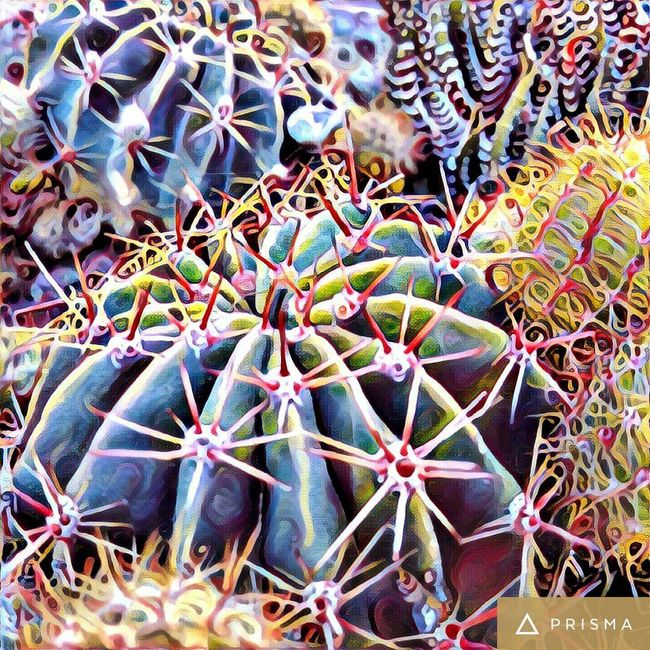 Prismacolor Prisma Plant Sharp Nature Green Color Focus On Foreground Full Frame Cactus Succulent Plant Backgrounds Freshness No People Growth Day Spiked Cactus Thorn Plant Growth Spiked Sharp Full Frame