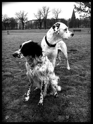 Dog Walking at Volkspark Friedrichshain by Niki Hedén