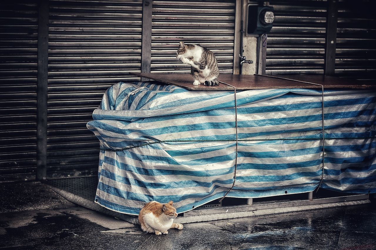 Cats Cat Watching Cat Photography Blue Pattern No People Fabric Day City Streets  EyeEm Best Shots - The Streets Light And Shadows City Streets  Streetphotography City Streets  Landscape Urban Landscape City Streets  Urban Exploration Outdoors Nature Cityscape City Landscape Travel Cute EyeEmNewHere