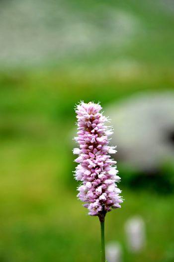 Loves_flowers Loves_nature Loves_flowers_ Igw_colors Igw_nature Beauty In Nature Beautiful Nature Capture The Moment Loves_details