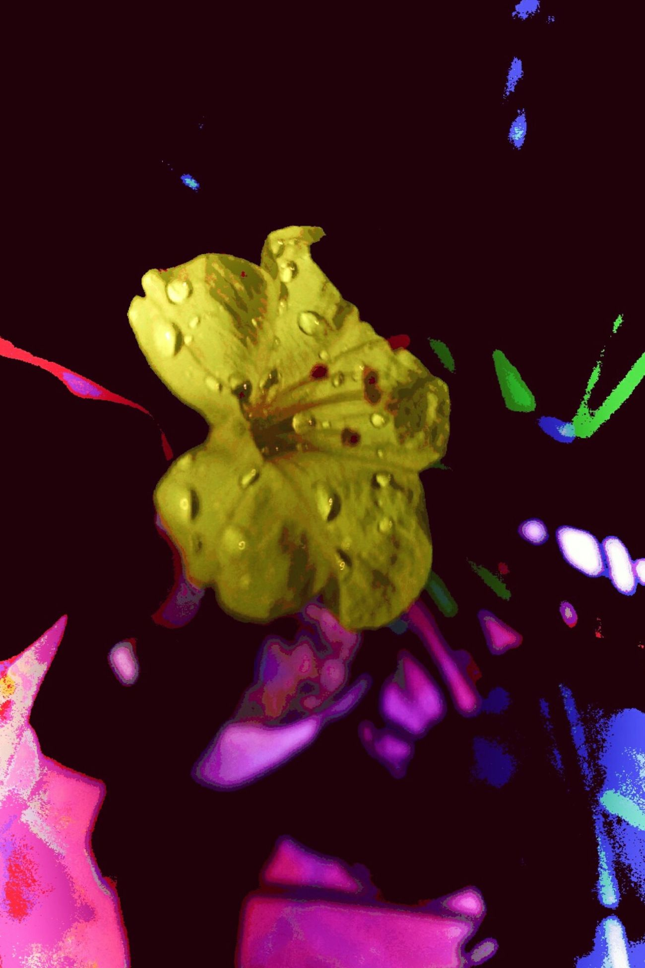 Flower Foto Editada Editada Edite By Me Edited