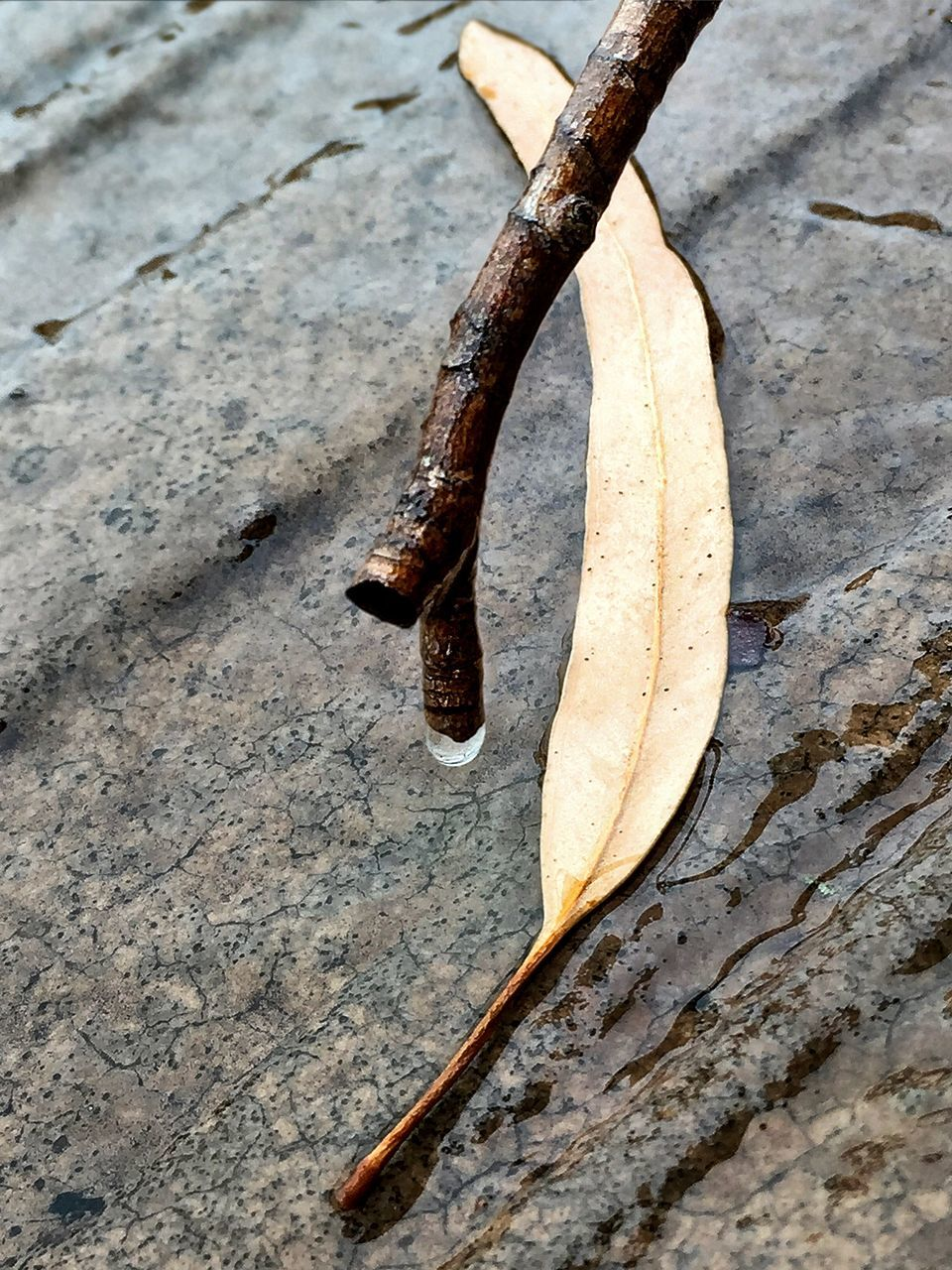 High Angle View Of Leaf On Wet Concrete During Monsoon