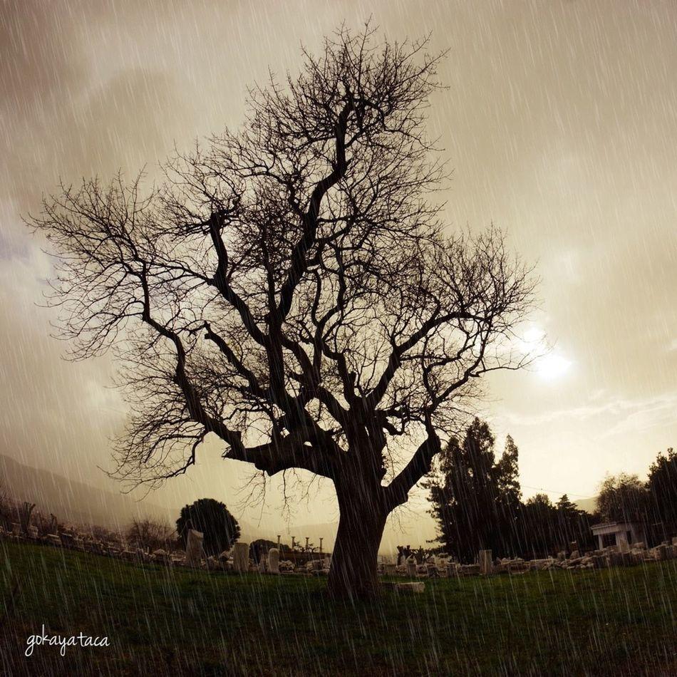 Rain Tree_collection  Trees Landscape Landscape_Collection History Hi! Izmir Hello World Weather