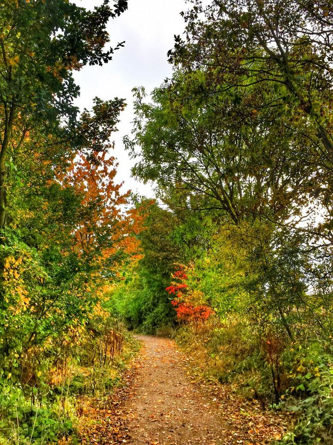 Walking in the CountrysideLeaves Nature Outdoors No People Beauty In Nature Green Color Tree Autumn Gt Bardfield
