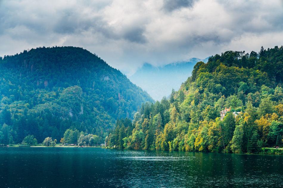 Forest Haze Lake Mountain River Sky Slovenia Tree Trees