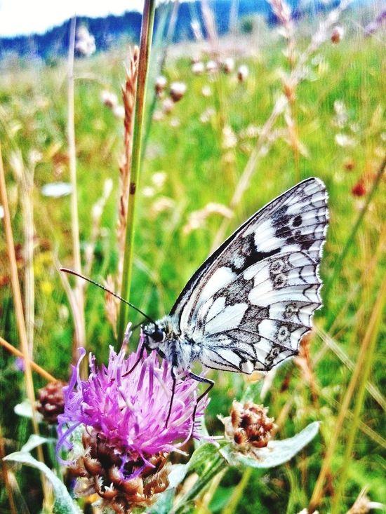 Buterfly Flowers Nature EyeEm Nature Lover Loveit Huaweihonor3c