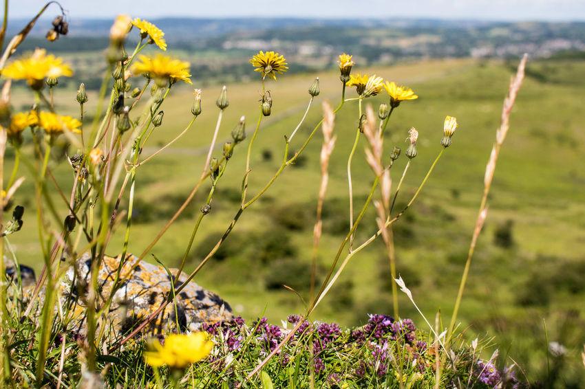 Crook Peak Somerset Nature_collection Landscape_collection EyeEmNatureLover EyeEm Best Shots Eye4photography