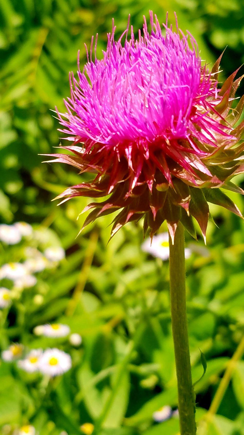 EyeEm Best Shots EyeEm Nature Lover Outdoor Photography Beauty In Nature Flowerporn Flowers EyeEm Flower Purple Nettle