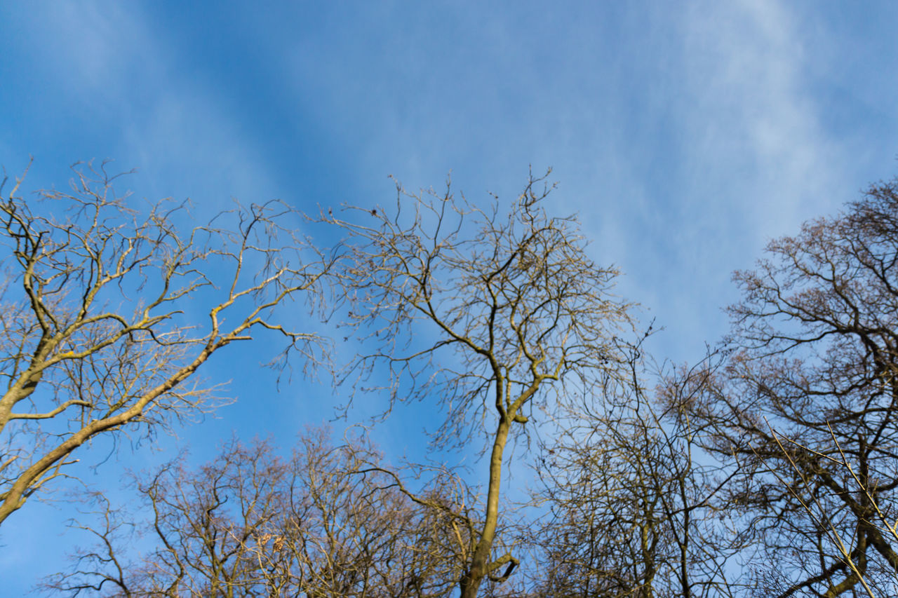 BARE TREE BRANCHES AGAINST A BLUE SKY Bare Trees In Winter Bare Tress Against Blue Sky Blue Sky Clouds Nice Skies Outdoors Photograpghy  Outside Tree Branches Against The Sky Uk