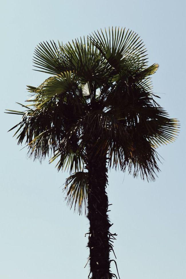Palm Tree Croatia Summer Pastel Blue Green Silhouette