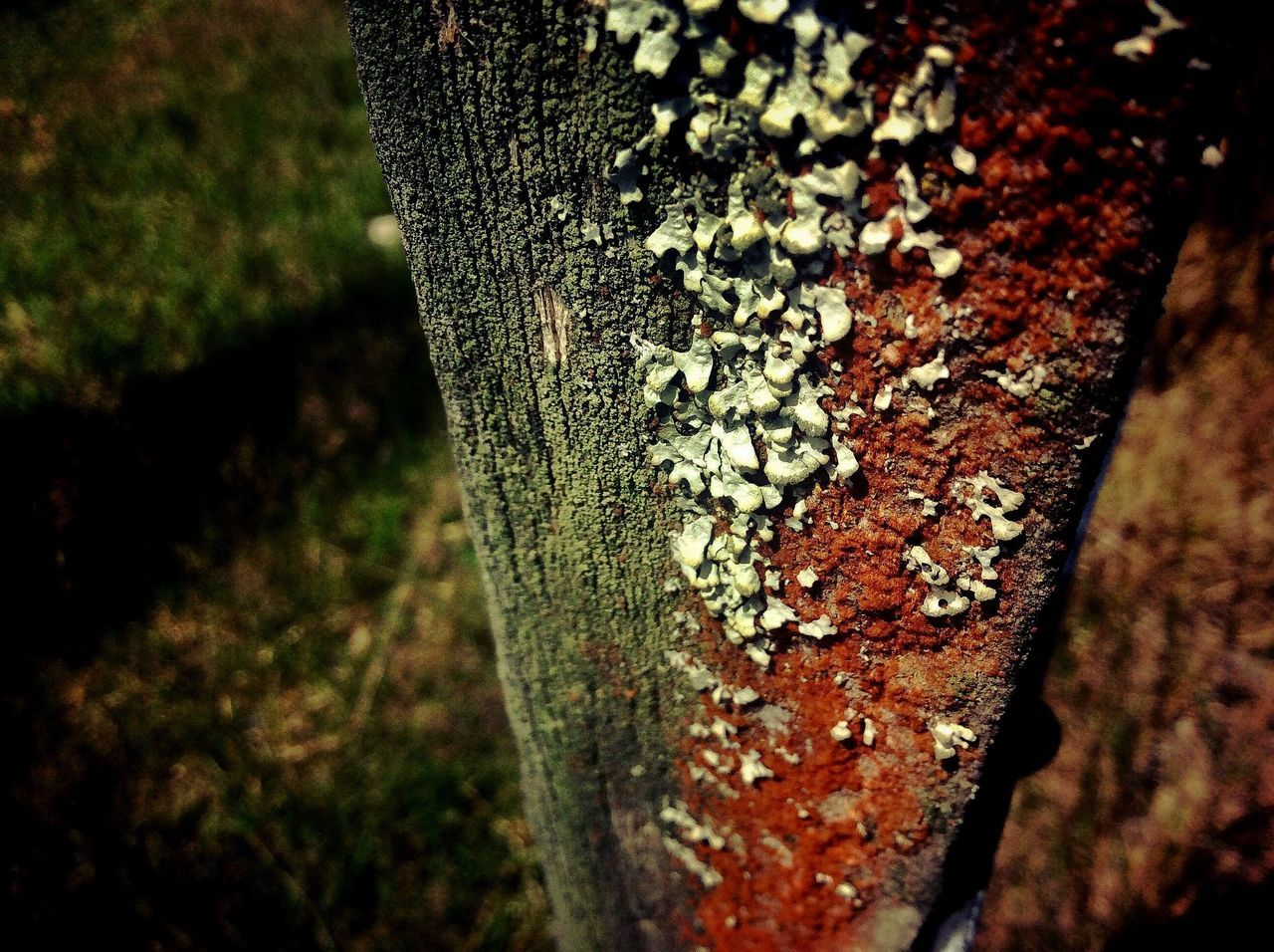 High Angle View Of Moss On Wooden Post