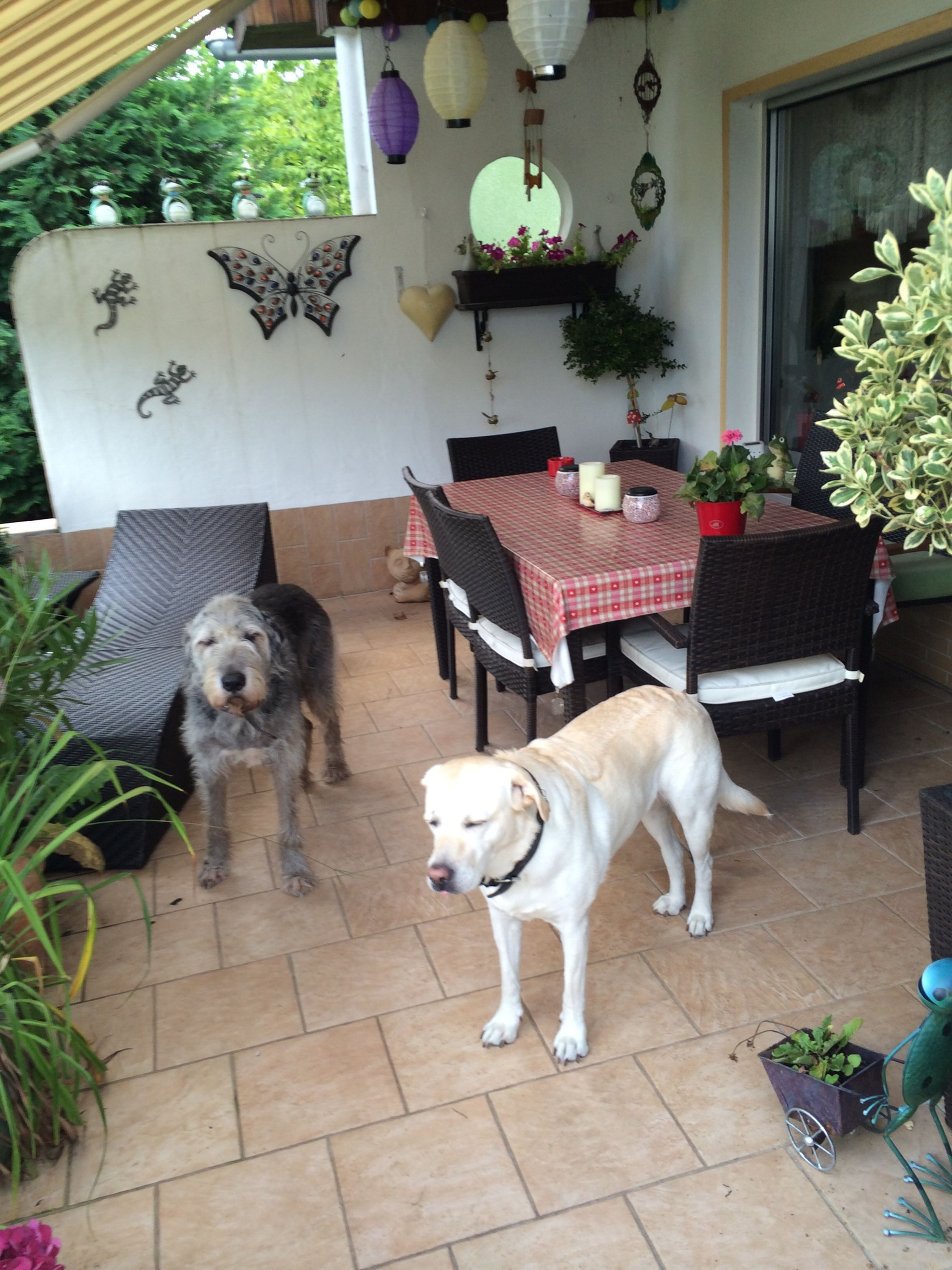 domestic animals, pets, animal themes, mammal, one animal, dog, built structure, building exterior, full length, architecture, sitting, relaxation, potted plant, two animals, looking at camera, no people, house, portrait, day, tiled floor
