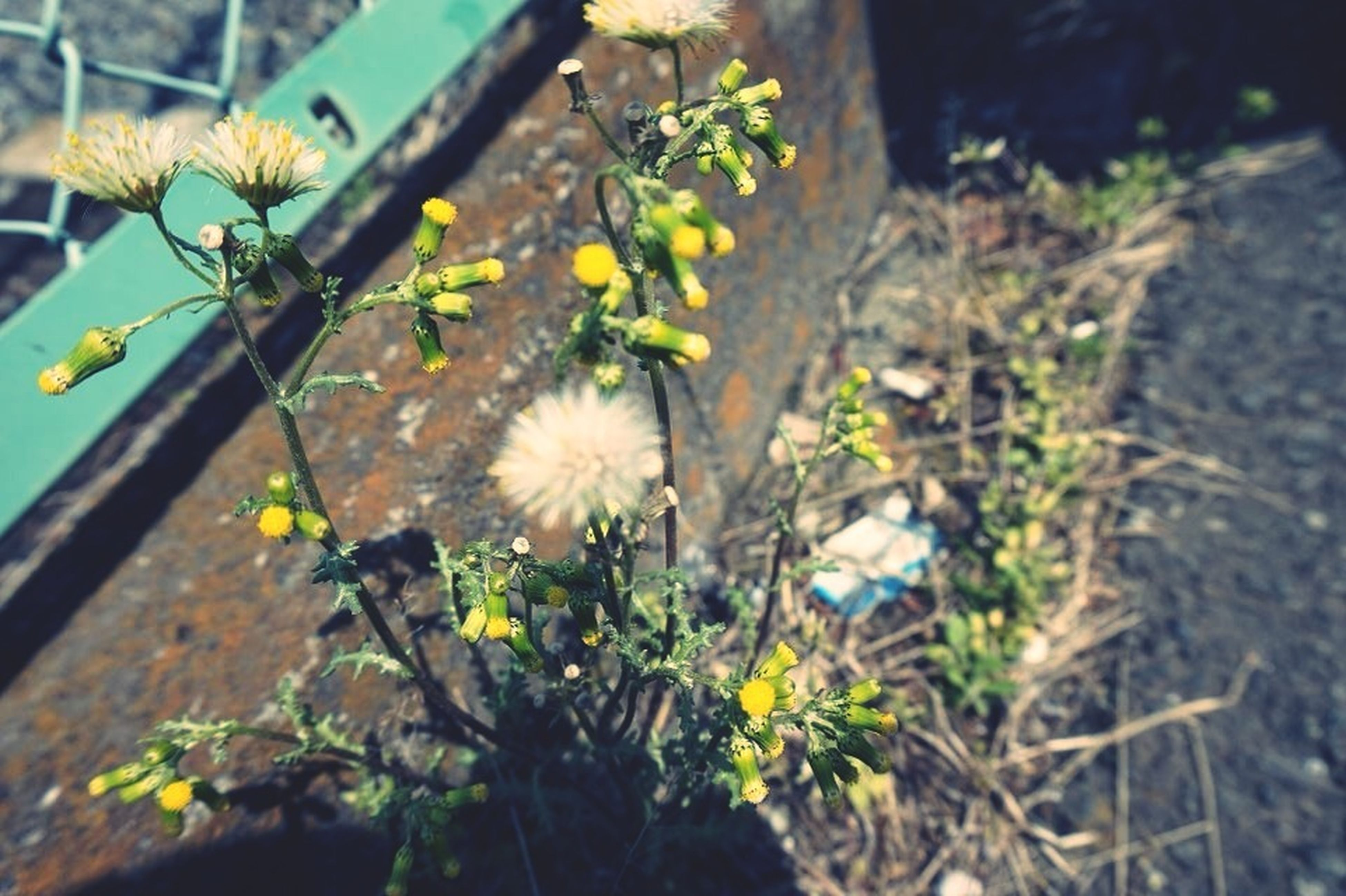 flower, growth, fragility, freshness, plant, petal, nature, beauty in nature, blooming, close-up, yellow, animal themes, in bloom, one animal, focus on foreground, leaf, white color, flower head, selective focus, outdoors
