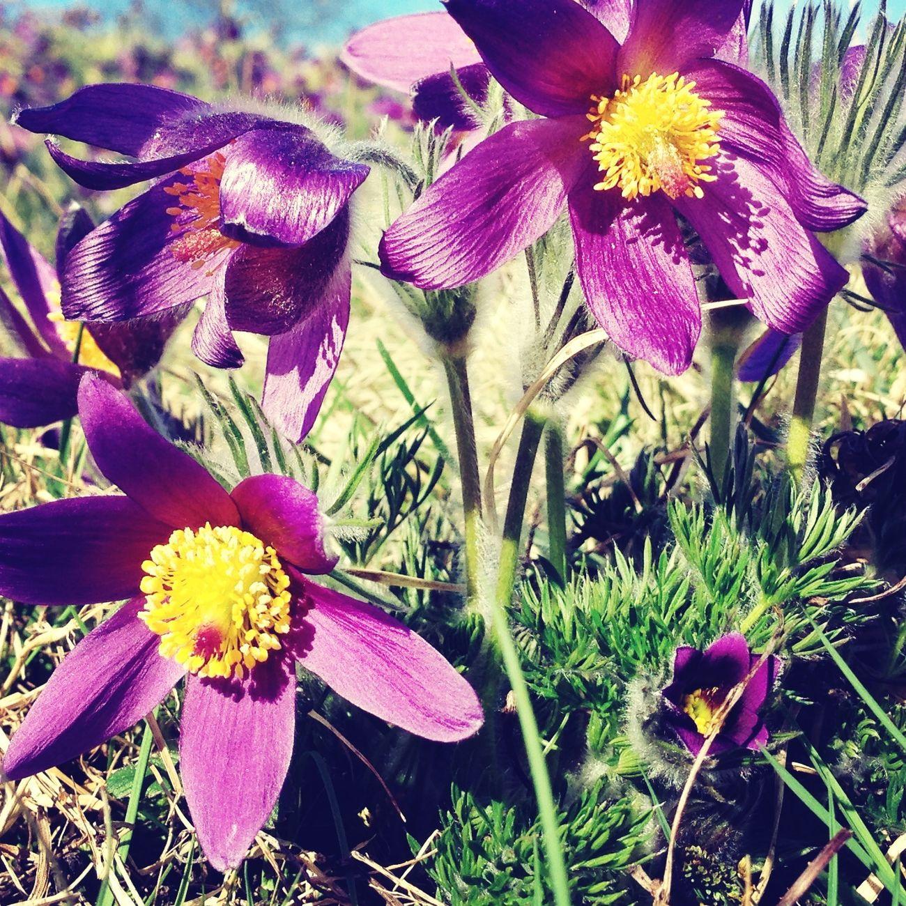 Purple Flower Whispers Of Spring ?☀️